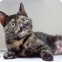 Adopt A Pet :: Kera - Merrifield, VA