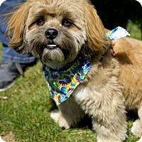 Adopt A Pet :: Frankie - Worcester, MA