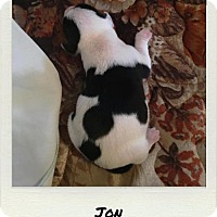 Adopt A Pet :: PUPPIES - 1 left, Jon - DeLand, FL
