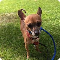 Adopt A Pet :: Champ - Salt Lake City, UT