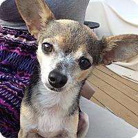 Adopt A Pet :: Devon - San Diego, CA