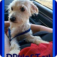 Adopt A Pet :: PRINCETON - Devine, TX