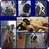 Adopt A Pet :: Bonnie - Tampa, FL