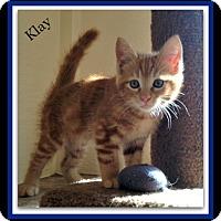 Adopt A Pet :: Klay - Tombstone, AZ