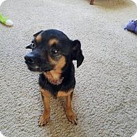 Adopt A Pet :: Buster - Flushing, MI