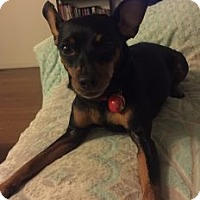 Adopt A Pet :: Kujo - Los Angeles, CA