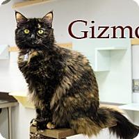 Adopt A Pet :: Gizmo - Hamilton, MT