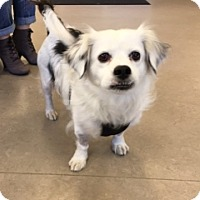 Adopt A Pet :: OUGIE - Albany, NY