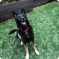 Adopt A Pet :: Simone - Alameda, CA