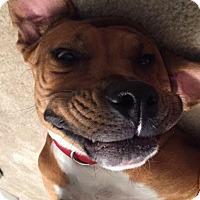 Adopt A Pet :: Trixie - Hayes, VA