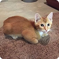 Adopt A Pet :: Crush - Wichita, KS