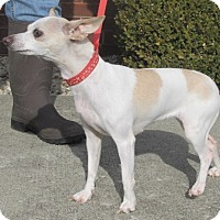 Adopt A Pet :: Jewel - Germantown, MD
