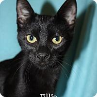 Adopt A Pet :: Tillie - Foothill Ranch, CA