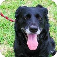 Adopt A Pet :: Lady - Austin, TX