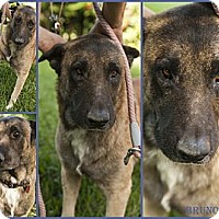 Adopt A Pet :: bRUNO - hollywood, FL