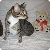Adopt A Pet :: Cookie - Poway, CA