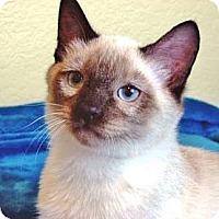 Adopt A Pet :: Prince Charming - Davis, CA