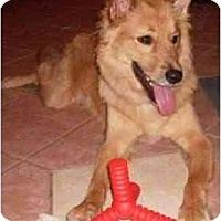 Adopt A Pet :: Boog - Gilbert, AZ
