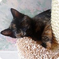 Adopt A Pet :: Jellybean - Lafayette, CA