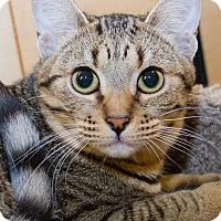 Adopt A Pet :: Ariana - Irvine, CA
