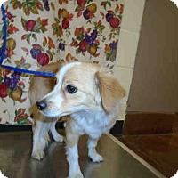 Adopt A Pet :: Danny - Simi Valley, CA