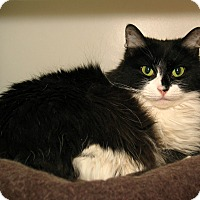 Adopt A Pet :: Claire - Milford, MA