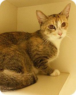 Cat Adoption Salem Nh