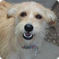 Adopt A Pet :: Lexi - Meet Her!! - Norwalk, CT