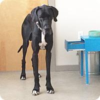 Adopt A Pet :: Bubba - O'Fallon, MO