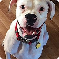Adopt A Pet :: Snow - Wilmington, NC
