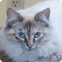 Adopt A Pet :: Star - Davis, CA