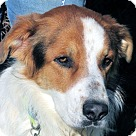 Adopt A Pet :: Fitch