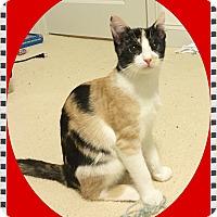 Adopt A Pet :: Mayhem - Mt. Prospect, IL