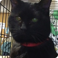 Adopt A Pet :: Spooky - Byron Center, MI