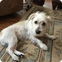 Adopt A Pet :: Lew - Windermere, FL