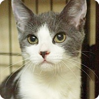 Adopt A Pet :: Mac and Roni - Medford, MA