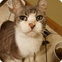 Adopt A Pet :: Marius - Wichita, KS