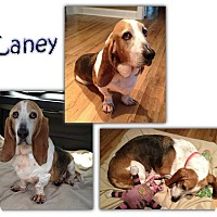 Adopt A Pet :: Laney - Marietta, GA