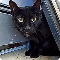 Adopt A Pet :: Zoe - Salisbury, MA