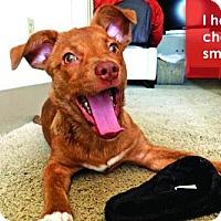 Adopt A Pet :: Sissy Boo - Grafton, WI