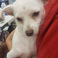 Adopt A Pet :: Pablo - Fresno, CA