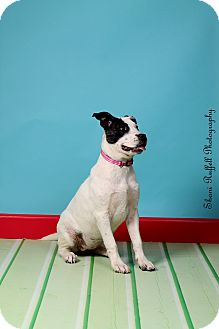 Cattle Dog Mix Dog for adoption in Jackson, Tennessee - Emmi