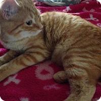 Adopt A Pet :: Tails - Taylor, MI
