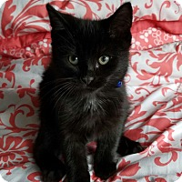 Adopt A Pet :: Rascal - Jeannette, PA
