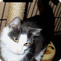 Adopt A Pet :: Bungee - Bentonville, AR