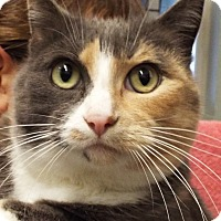 Adopt A Pet :: Pearl - Grants Pass, OR