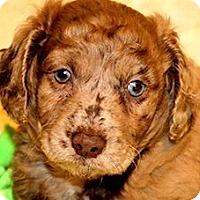 Adopt A Pet :: LOGAN(OUR