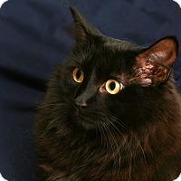 Adopt A Pet :: Salem - Toms River, NJ