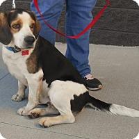 Adopt A Pet :: Winston/marina - White Bluff, TN