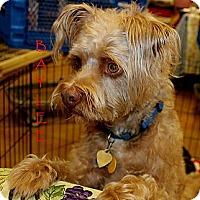 Adopt A Pet :: Baylee - Silsbee, TX